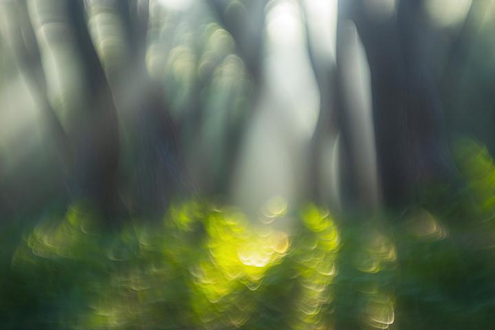 삼릉숲.jpg